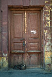 Кот сидя на старой, темной деревянной двери Стоковое Фото