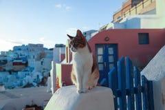 Кот сидя на стене Стоковая Фотография