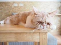 Кот сидя на таблице Стоковая Фотография RF