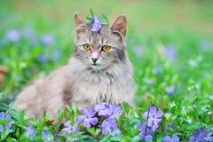 Кот сидя на лужайке барвинка Стоковое фото RF