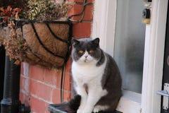 Кот сидя на уступе окна Стоковая Фотография