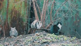 Кот 3 сидя на улице акции видеоматериалы