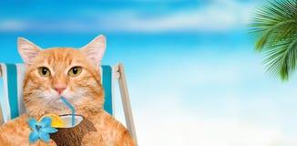Кот сидя на deckchair и наслаждаясь сидеть коктеиля ослабляя на deckchair Стоковые Изображения