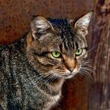 Кот сидя около двери Стоковая Фотография RF