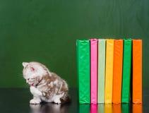 Кот сидя около книг и моя Стоковые Фото