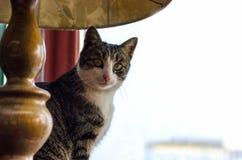 Кот сидя около окна Стоковая Фотография