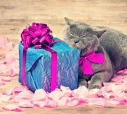 Кот сидя около подарочной коробки Стоковое Фото