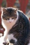 Кот сидя при повернутая голова Стоковые Фото