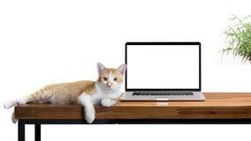 кот сидя с пустой компьтер-книжкой на деревянном столе на белизне Стоковая Фотография RF