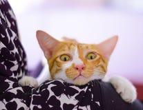 кот смешной Стоковое Фото