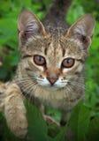 кот смешной Стоковое фото RF