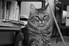 кот смешной Стоковые Изображения RF