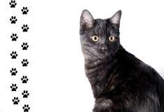 кот смешной Стоковые Изображения