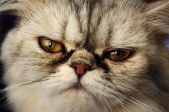 кот смотрел на плоское резвое Стоковое фото RF