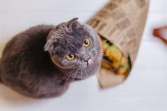 Кот смотрит верхнее усаживание на предпосылке цветков стоковые изображения rf