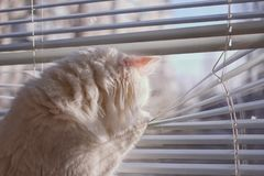 Кот смотрит вне окно стоковые изображения rf