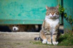 Кот смотрит вперед с предпосылкой собаки Стоковая Фотография
