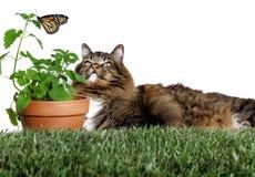 Кот смотря бабочку Стоковые Фото