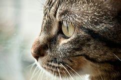 кот смотря вне окно Стоковое Изображение RF
