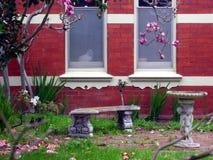кот смотря вне Стоковая Фотография