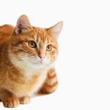 Кот смотря вниз изолирован на белизне Стоковые Изображения