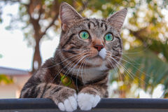Кот смотря вокруг парка Стоковая Фотография