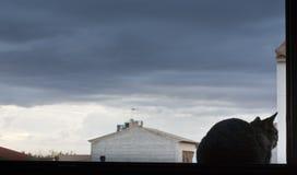 Кот смотря к небу стоковое изображение