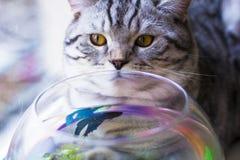Кот смотря на рыбах Стоковое Фото