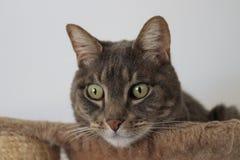 Кот смотря от его корзины Стоковое фото RF