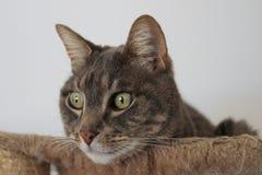 Кот смотря от его корзины Стоковая Фотография RF