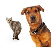 Кот смотря собаку стоковая фотография rf