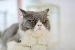 Кот смотря, что препровождать Стоковое фото RF