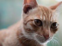кот смотря что-то Стоковые Изображения RF