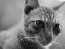 кот смотря что-то Стоковое фото RF