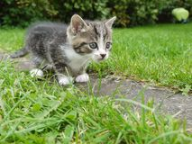 Кот снаружи Стоковые Фотографии RF