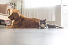 Кот собаки и a snuggle совместно стоковая фотография rf