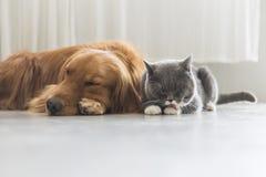 Кот собаки и a snuggle совместно стоковые фотографии rf