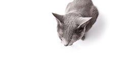 кот сонный Стоковые Изображения