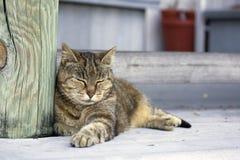 кот сонный Стоковая Фотография RF