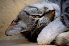 кот сонный Стоковое фото RF