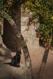 Кот Солнця Стоковые Фотографии RF