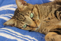 Кот спасения Стоковые Изображения RF