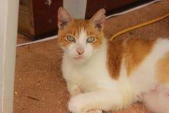 Кот спасения Стоковое Фото