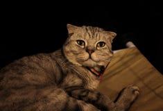 Кот спать в зеленой мягкой уютной софе кровати стоковая фотография
