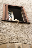 Кот спать в окне Стоковая Фотография RF