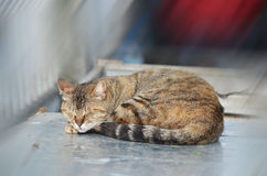 Кот спать в Стамбуле, Турции стоковое фото rf