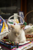 Кот спать в туристском магазине Стоковое Изображение