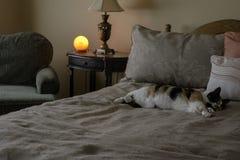 Кот спать и гималайская лампа соли стоковые изображения