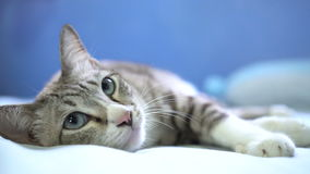 Кот спать и поворачивает вокруг для того чтобы посмотреть назад акции видеоматериалы