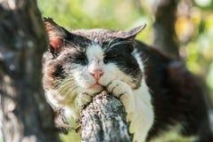 Кот спать на дереве Стоковое Изображение RF